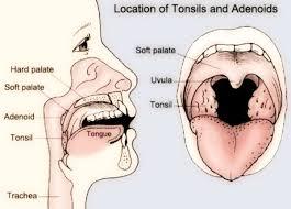 TONSILLITE - ADENOIDI - Herbasalux
